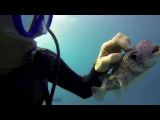 Unbelievable - First Time Scuba Diving in Hawaii with an Oahu Friendly Puffer Fish