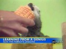 ALEX - One of the most smartest parrots ever!