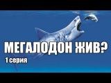 Мегалодон - акула, которая еще жива (1 серия)  Интересные факты