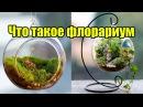 Что такое флорариум и как его сделать своими руками ДОМ ДИЗАЙН ИНТЕРЬЕР