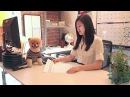 Boo - A Day in the Life of the World's Cutest Dog -  Book Trailer