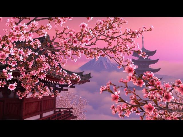 Красота цветущей сакуры (подборка фото)