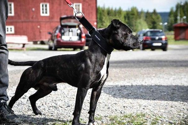 Фото собак в спортивной кондиции - Страница 5 Uw3dEnsnGGA