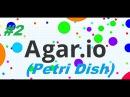 Petri Dish - Чашка Петри - русский агар 2