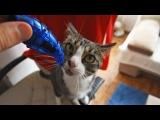 Nikita Cat Goes Crazy with Hexbugs