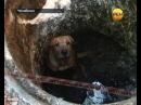 Спасение собаки . Экстренный вызов 112. РЕН ТВ.