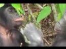 Спаривание животных Секс Коровы Гориллы Лошади 18+ Sex Mating animals Cows Gorillas Horses