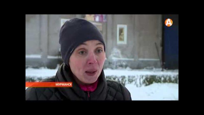 В канун Нового года 200 собак и кошек в Мурманске могут остаться без корма 18.12.2015