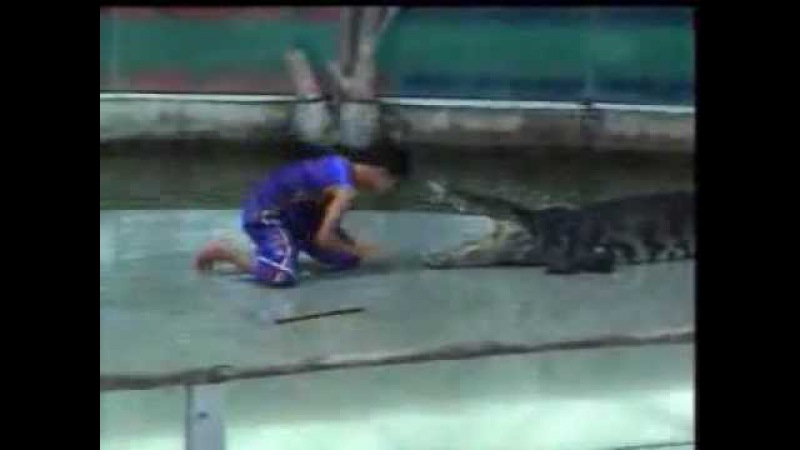 Крокодил укусил за руку! Жесть! [Crocodile bitten hand!]
