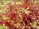 Полевые работы уголок отдыха борьба с сорняками посадка кустов сведины барбариса и рассады помидор