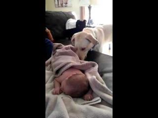 Собака нянька The dog nanny der Hund Kindermädchen