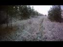 Охота на лося видео выстрела