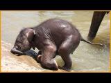 Как слоненок нашел маму. Животные африки. Люди спасают животных