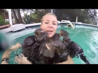 Девушка купается в бассейне с выдрами, мимимишно)