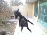 Прикольный ослик