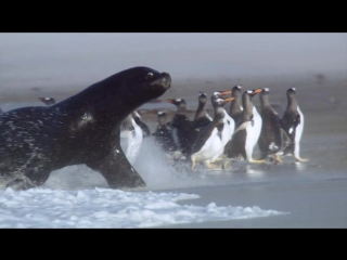 BBC | Frozen Planet ' To the Ends of the Earth | Замёрзшая планета ' На краю Земли