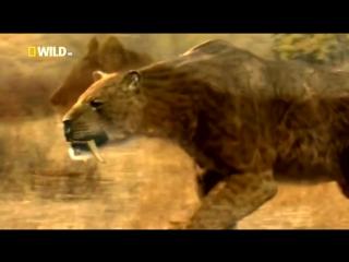 Доисторические хищники-Саблезубый Тигр(динозавры HD) документальный фильм
