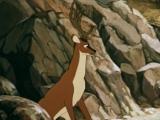 4. Олень и волк