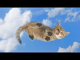 Funny Cat & Cute Kittens Fail Videos   The Best Funny Kitty Cat Video № 22   |  Morsomme Katter № 22