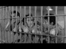 JIM JARMUSCH. Down By Law. 1986 - Bajo El Peso De La Ley. Sub