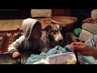 Собака говорит мама
