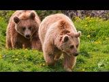 Живая природа фото - животные - классные фотографии животных