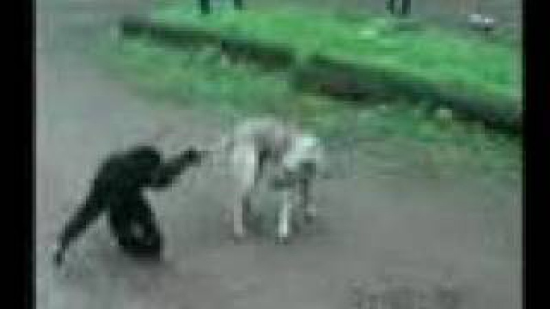 Playful Gibbon teasing a Dog (MUST SEE)