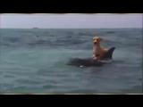 дельфин спасает собаку от акулы скачать видео бесплатно 3 тыс. видео найдено в Яндекс.Видео_0_1445344291931