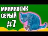 Это интересно #7 - Миникотик,  серый кот, серая кошка, котик умывается, серый котенок, коты и кошки