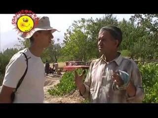 Узнайте, как делают изюм Киш-миш (сушеный виноград) в Узбекистане