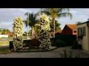 Австралия 2015.  Природа Австралии. Райский садик возле дома.   Australia,  Perth