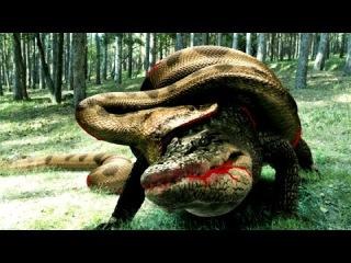 Anaconda Vs Crocodile - Python Vs Alligator - Python Vs Crocodile - Giant Snake Attack