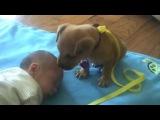 Сонный щенок изо всех сил охраняет спящего малыша