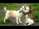 Meilleures Chiens et chats drôles de Janvier 2015 FULL HD VIDEO