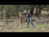 LOL Man punches kangaroo in the face to save dog!