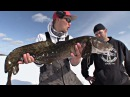 Burbot Semen Sequence - iTrout (Part 1 of 3) - Uncut Angling - January 1, 2013