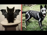Creative Halloween Costumes for Pets (
