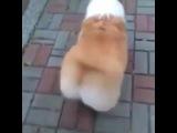 Bitch (Vine Video)