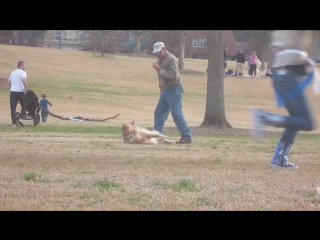 Ленивый пес не хочет покидать парк, axaaa !!