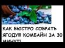 DIY Стакан комбайн для сбора ягод своими руками Glassful harvester for picking berries