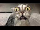 Beste lustige Katzen videos und Hunde 2016 Katze schlägt fehl, Hund nicht Lustige Haustiere