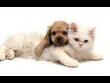 Кот и маленькая собачка)