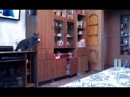 Я и мой кот играем в пинг понг - Cat Playing Ping Pong
