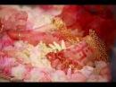 Shri Mataji Nirmala Devi - Supreme Divine Lotus Feet