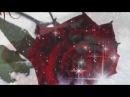Анжелика Агурбаш. Роза на снегу.