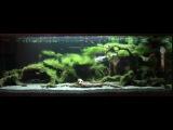 Оформление биотопного аквариума с водорослями