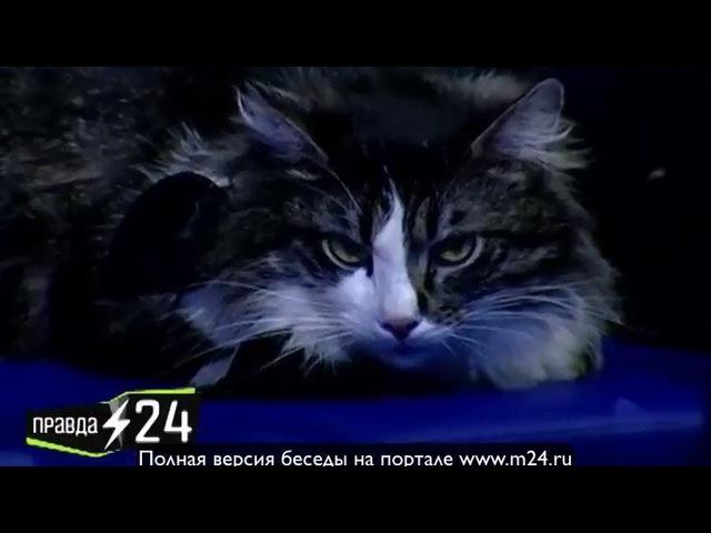Владимир Жеребцов Нет времени пить