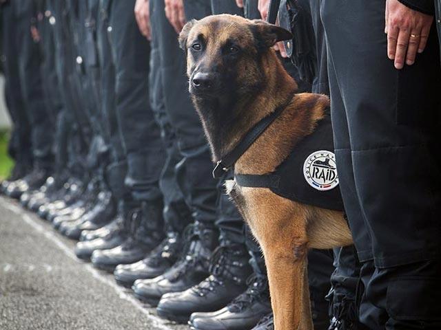 МВД России подарит французским коллегам щенка, чтобы поддержать их после гибели пса Дизеля
