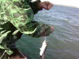 Северное море. рыбалка. скумбрия