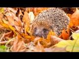 «Вот и осень...» под музыку Осенние мелодии - .Вальс опадающих листьев. Picrolla